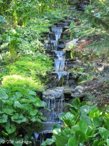 water garden in Trebah Garden, Cornwall